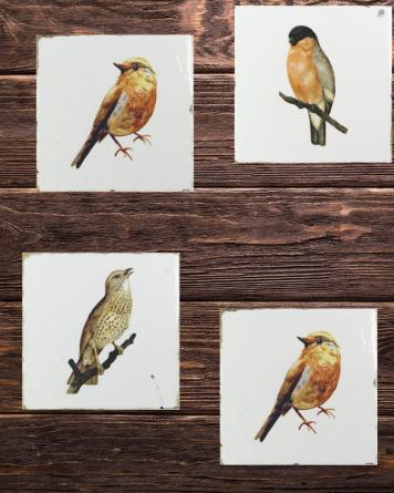 Forli Birds